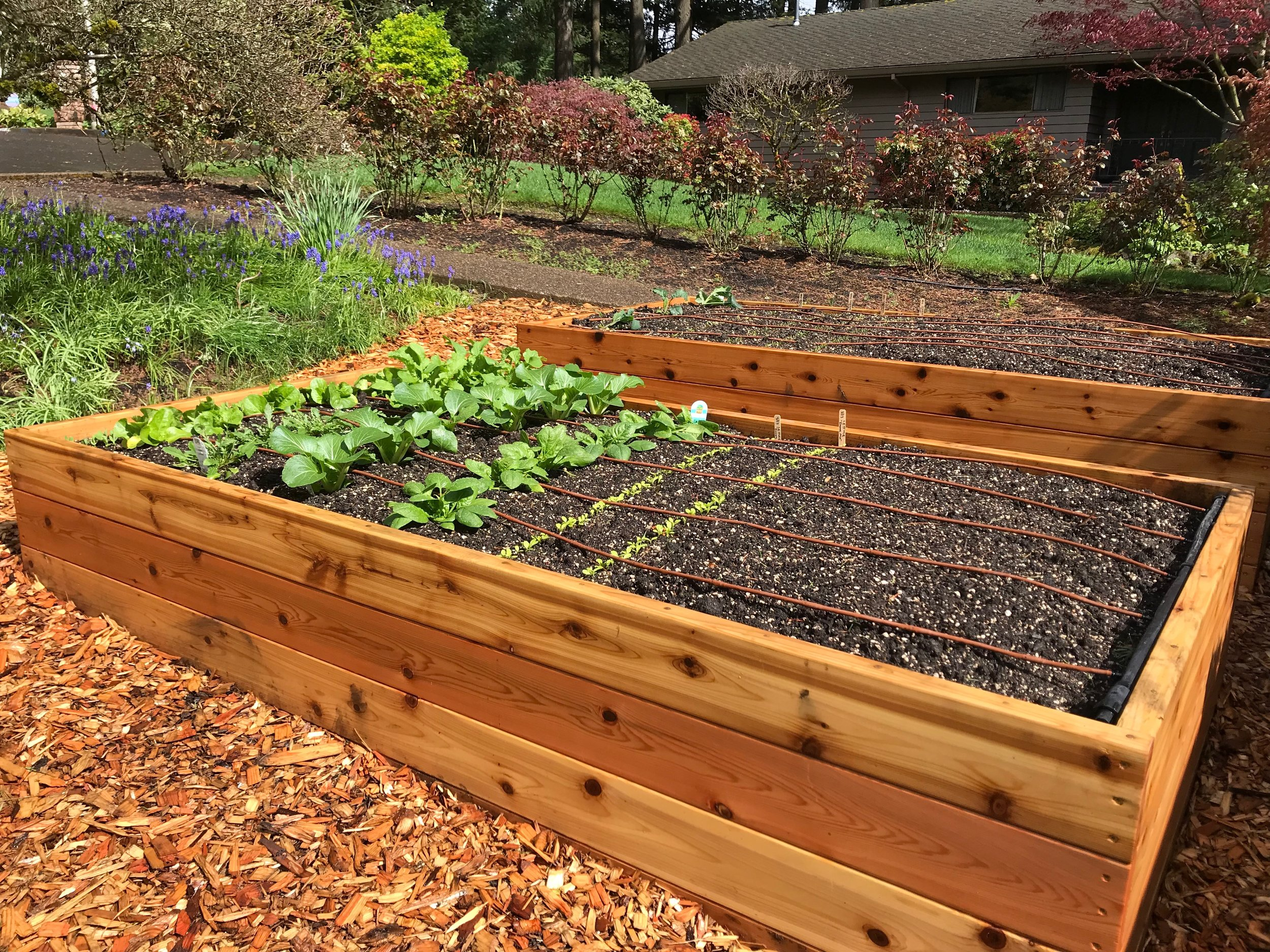Planted Cedar Raised Garden Bed