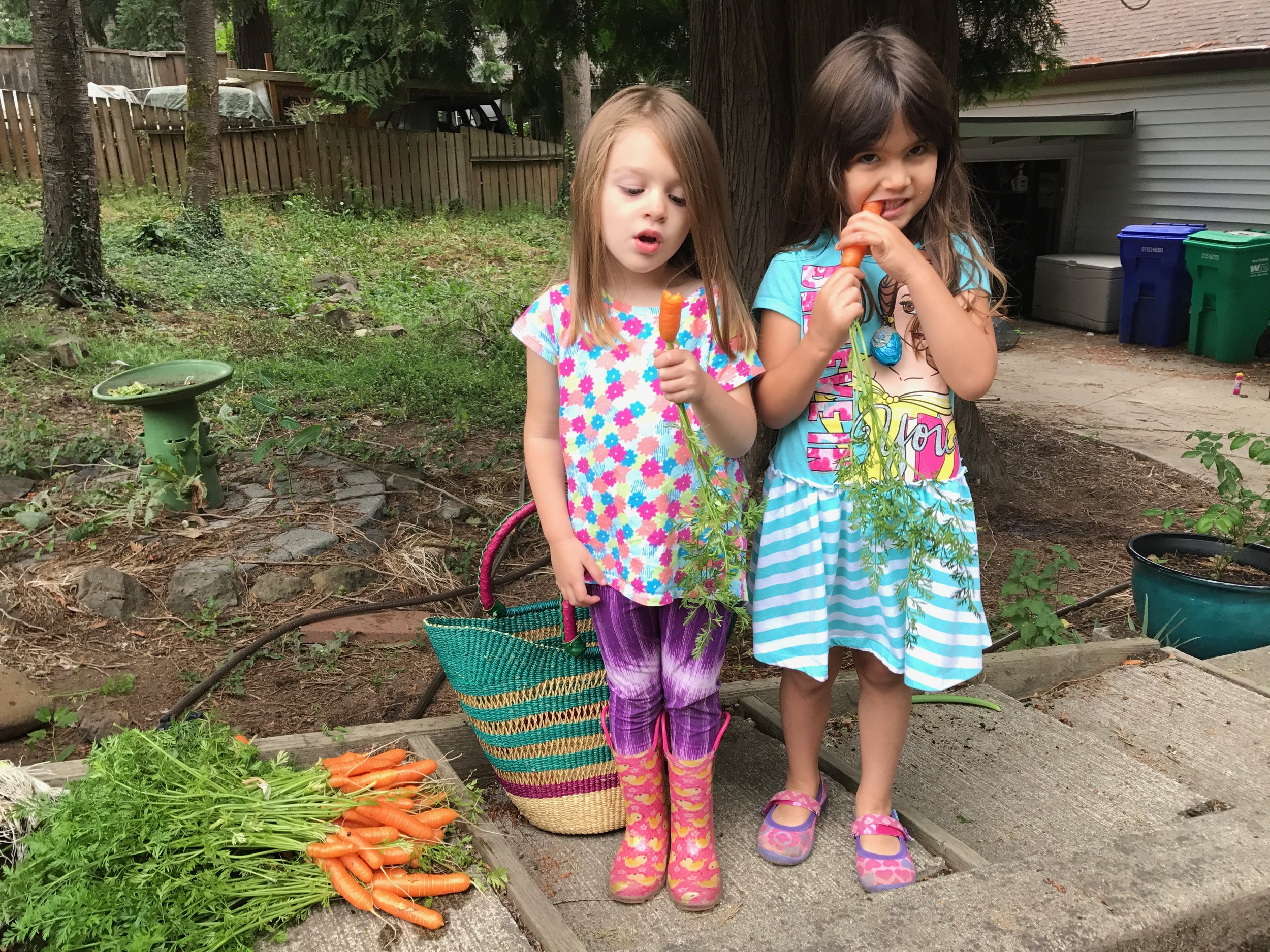 Kids Eating Carrots in the Vegetable Garden