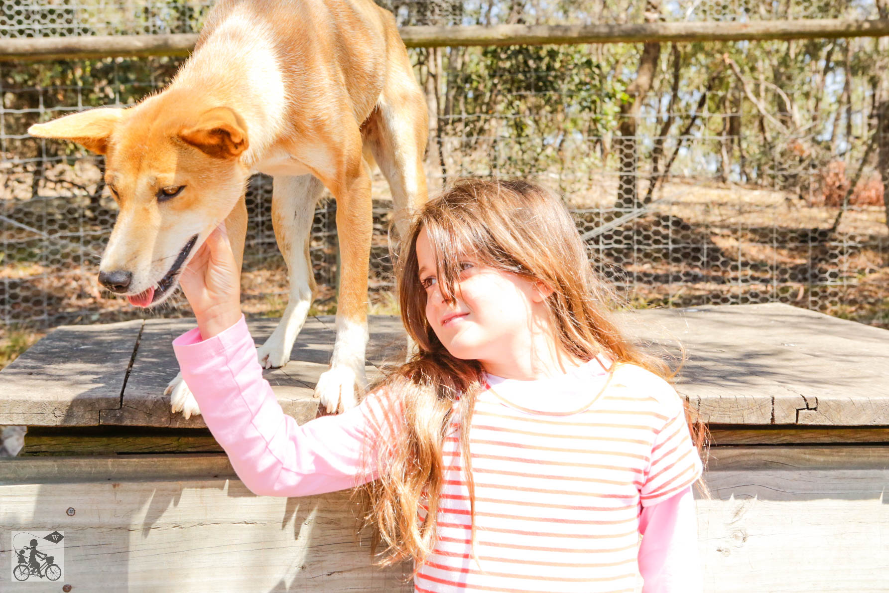 Mamma Knows West - Dingo Discovery Sanctuary (35 of 51).jpg
