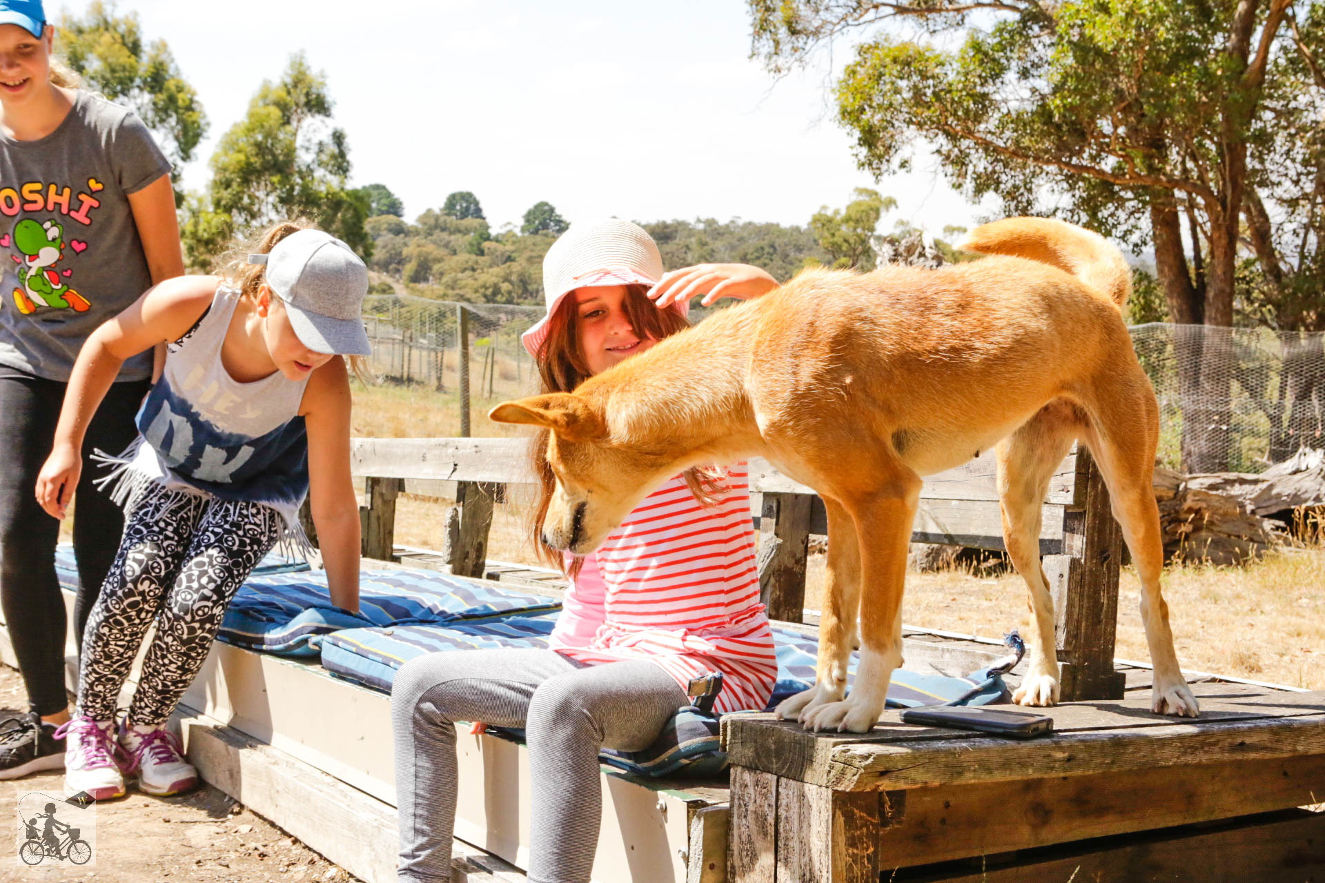 Mamma Knows West - Dingo Discovery Sanctuary (36 of 51).jpg
