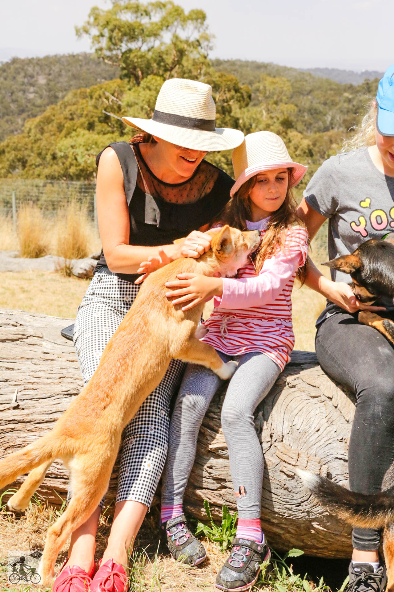 Mamma Knows West - Dingo Discovery Sanctuary (54 of 51).jpg
