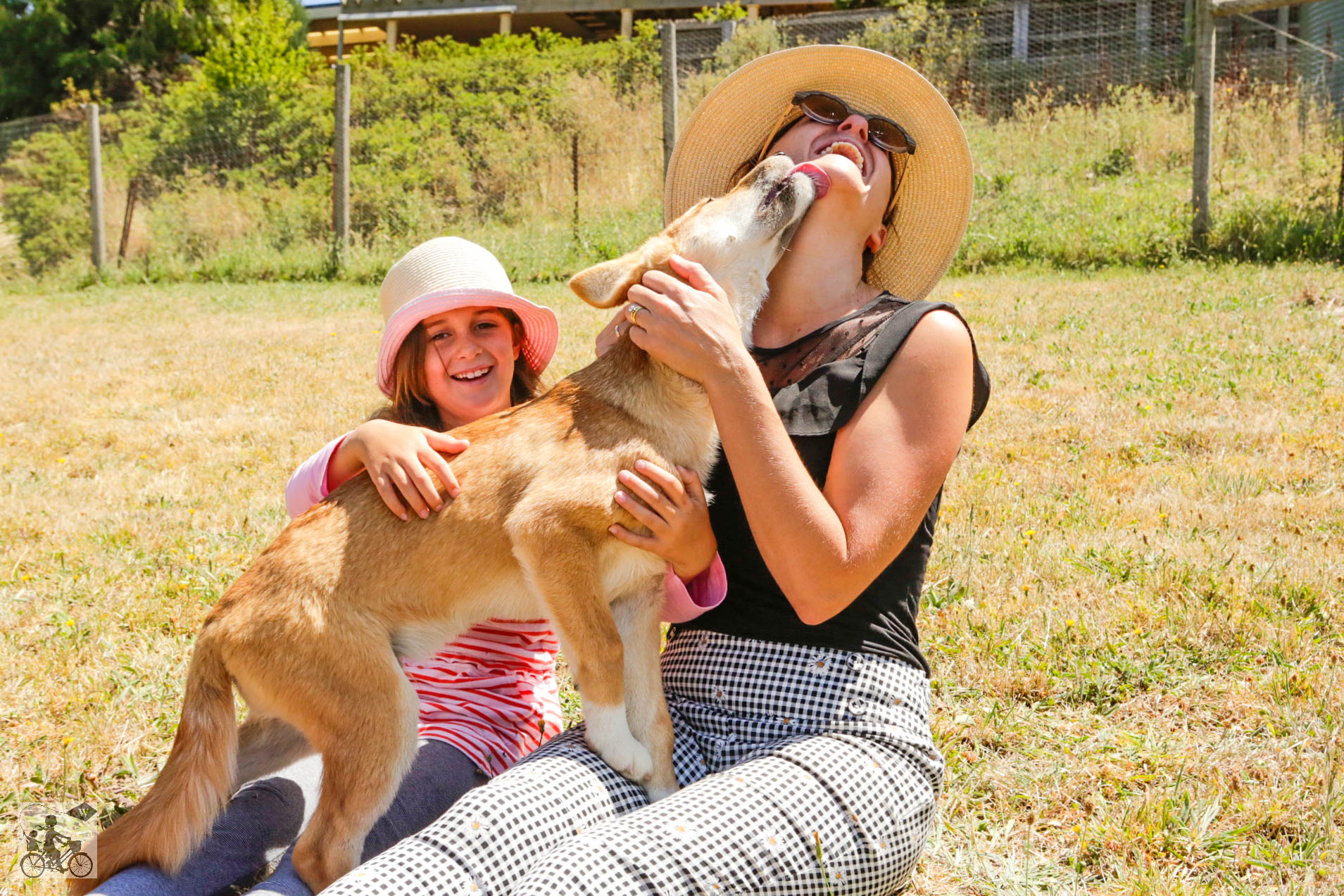 Mamma Knows West - Dingo Discovery Sanctuary (60 of 51).jpg