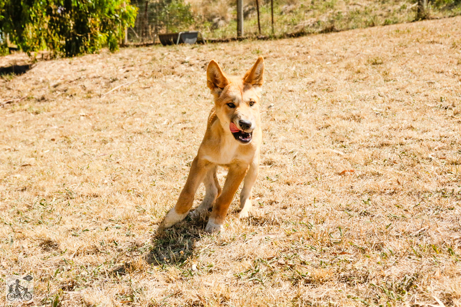 Mamma Knows West - Dingo Discovery Sanctuary (69 of 51).jpg