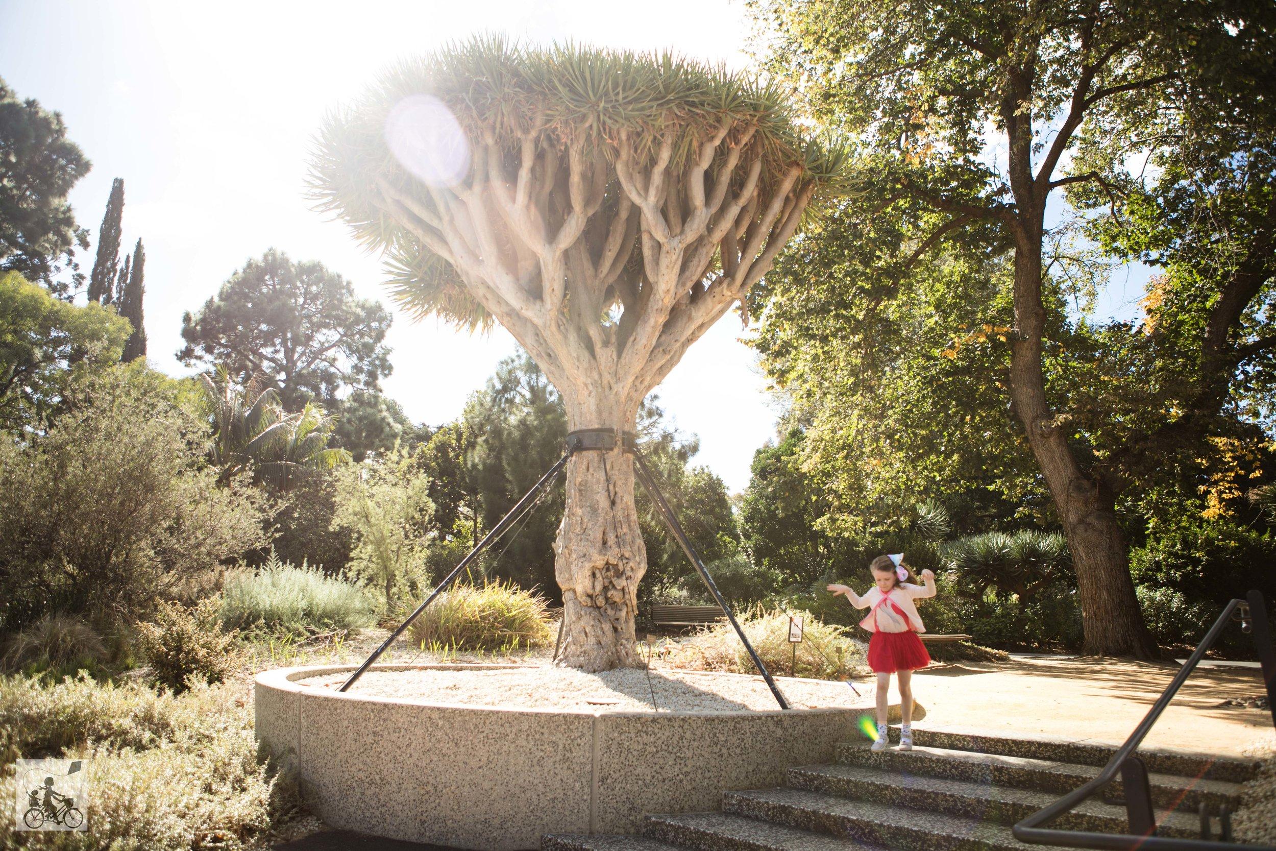 Mamma Knows West - Geelong Botanical Gardens