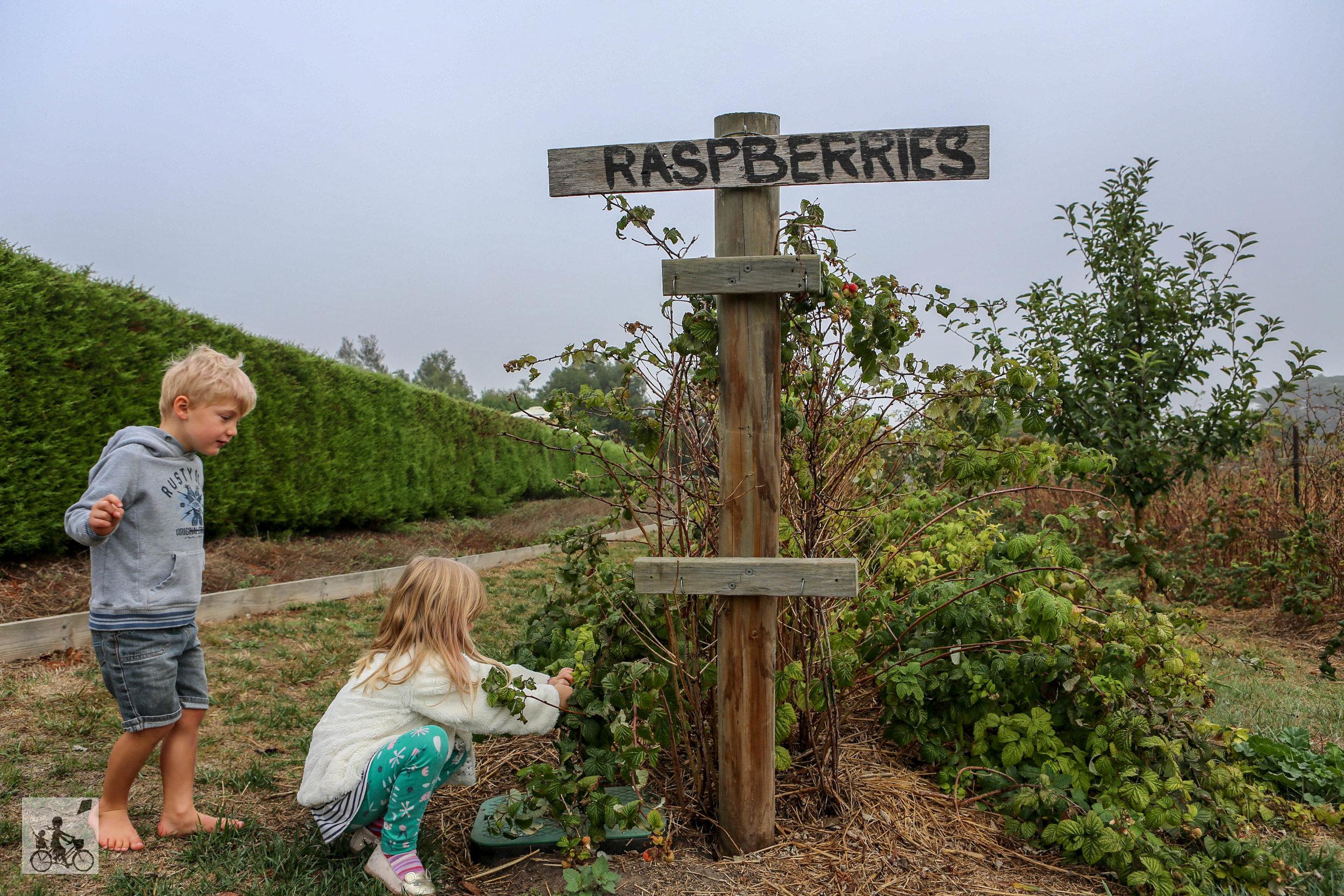 Raens Creek Farm  - Mamma Knows West (4 of 25).jpg