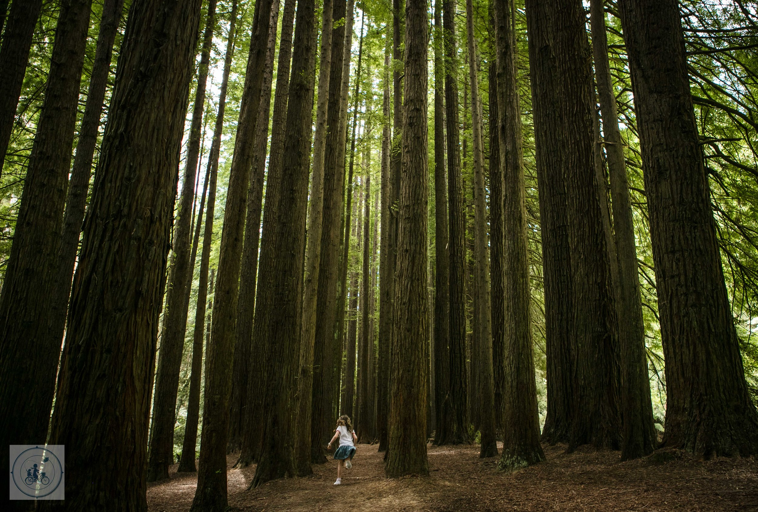 Californian Redwoods 2019 Mamma Knows West (63 of 92).jpg