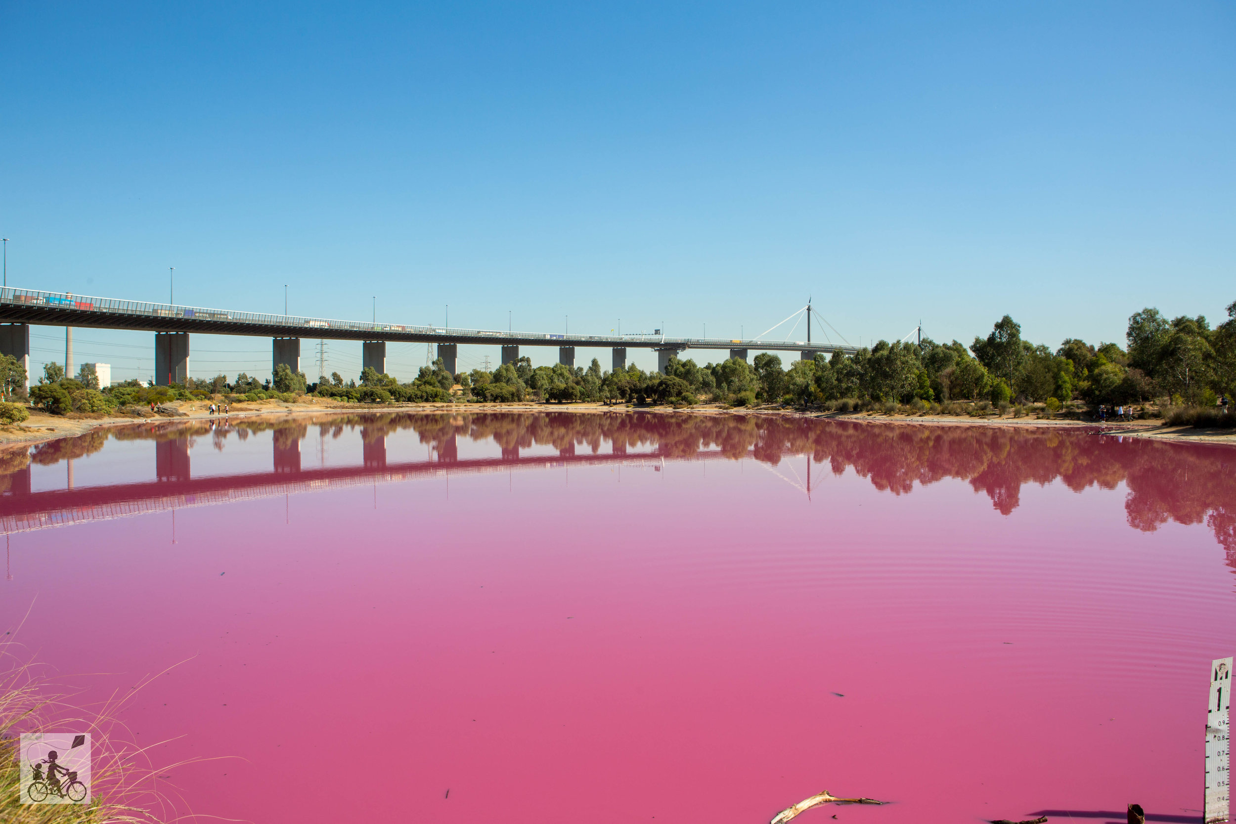 Pink Lake - Mamma Knows West
