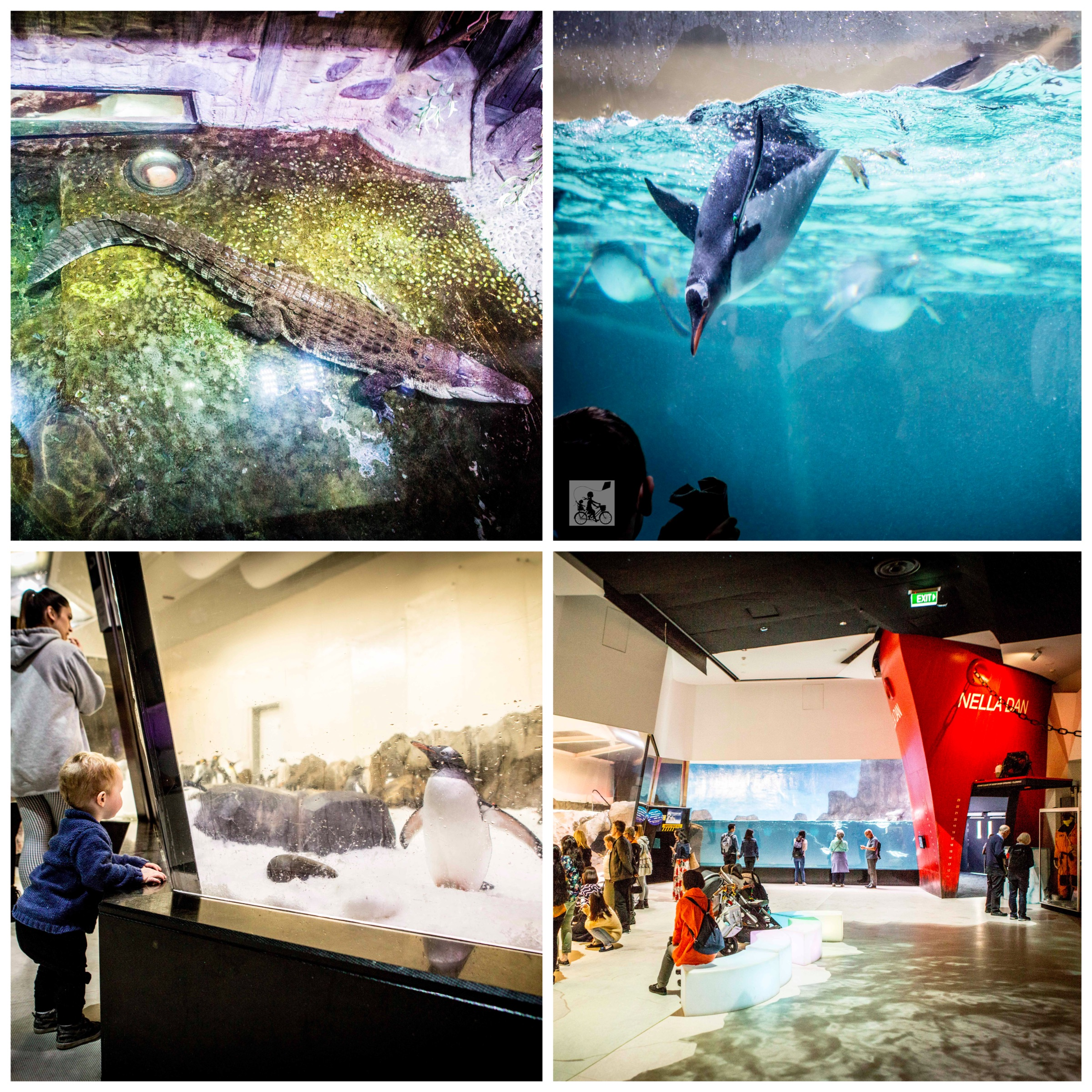 02 Sealife Aquarium - Mamma Knows East (1 of 52).jpg