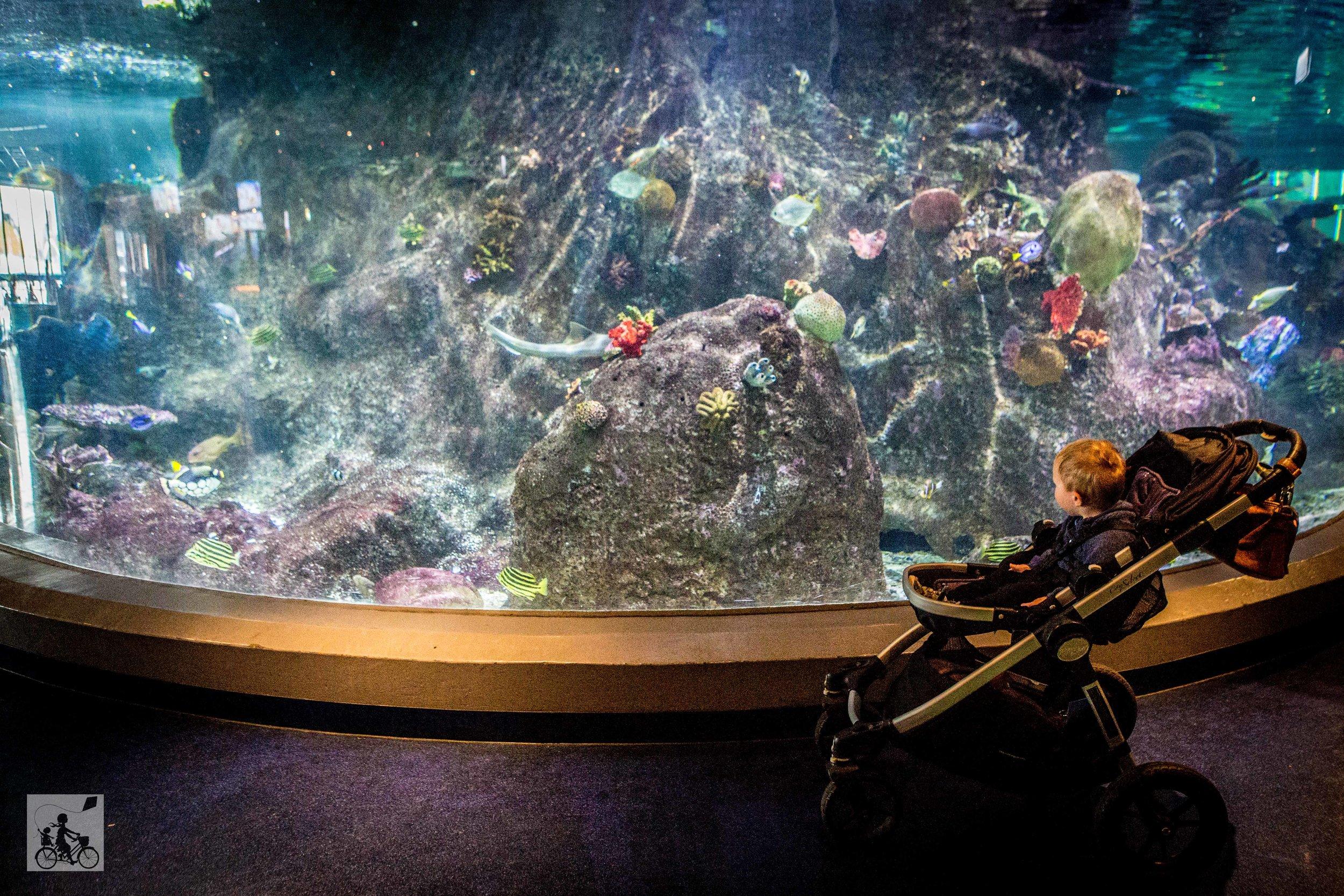 Sealife Aquarium - Mamma Knows East (26 of 52).jpg