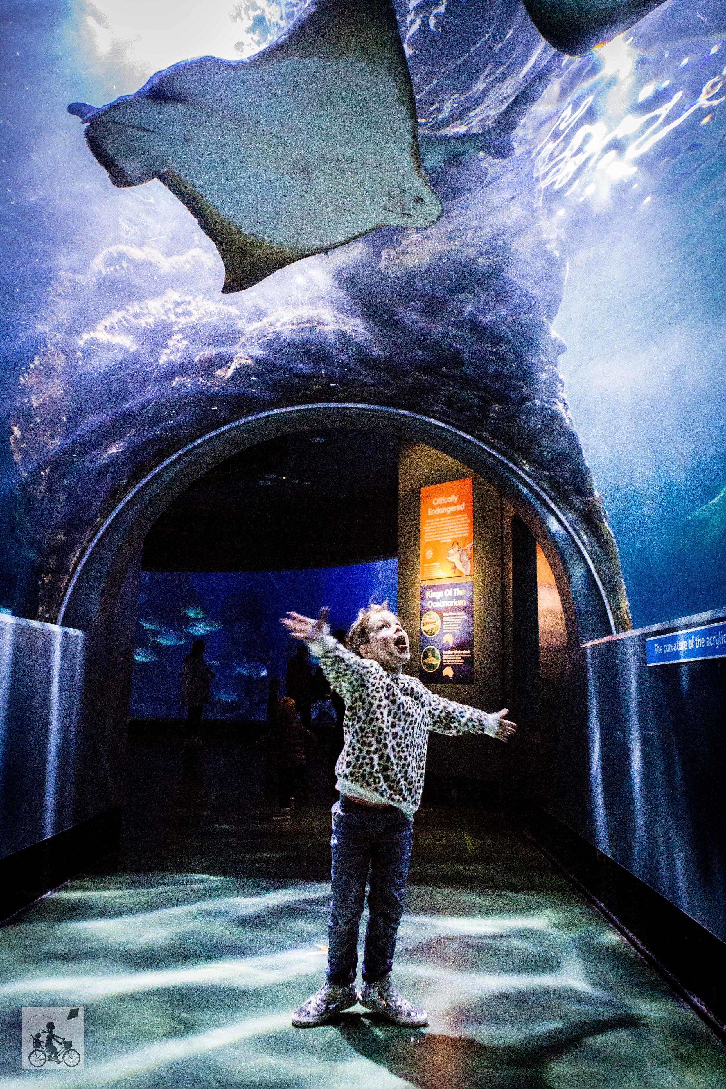 Sealife Aquarium - Mamma Knows East (22 of 52).jpg