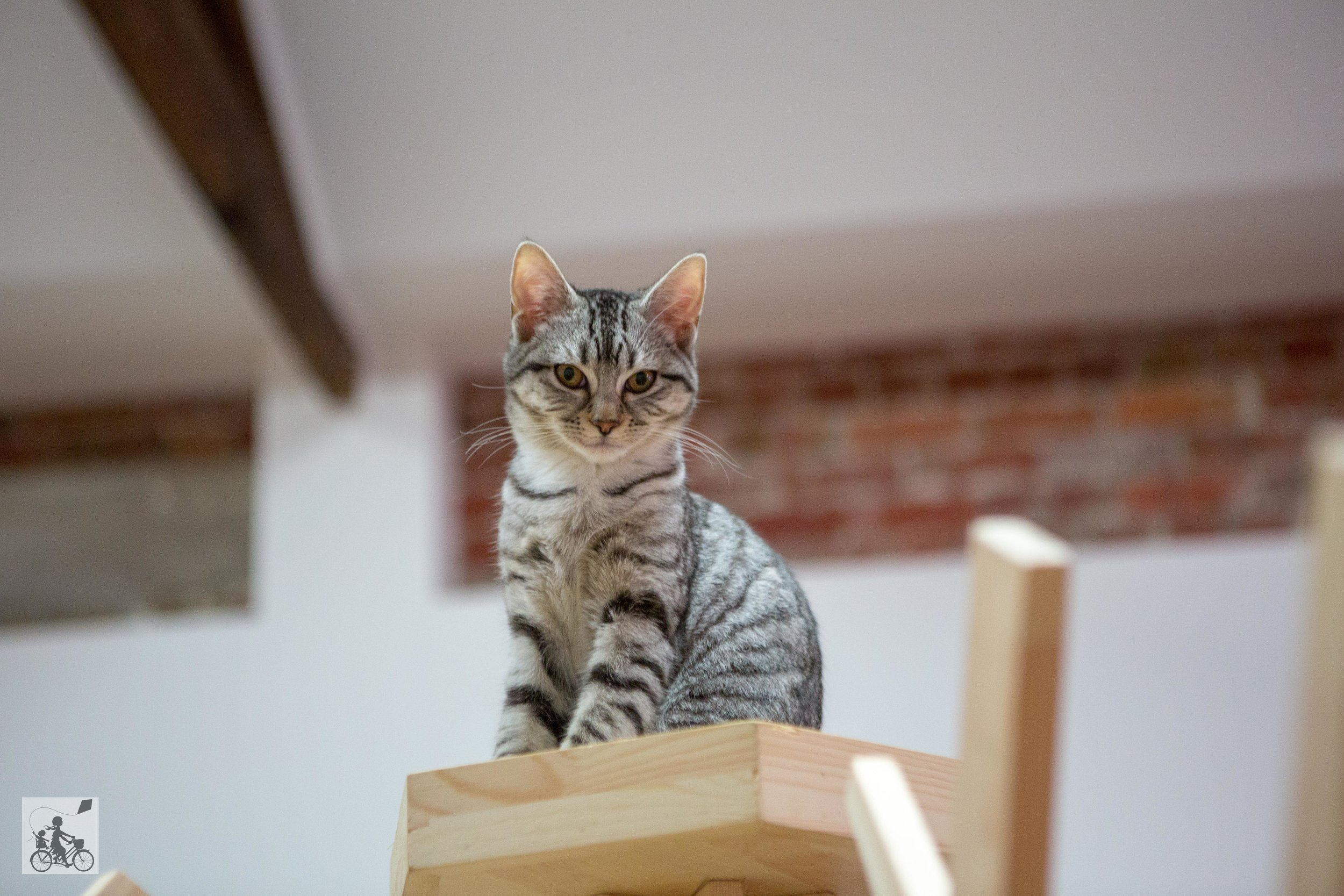 Cat Cafe -  Mamma Knows West-12.jpg