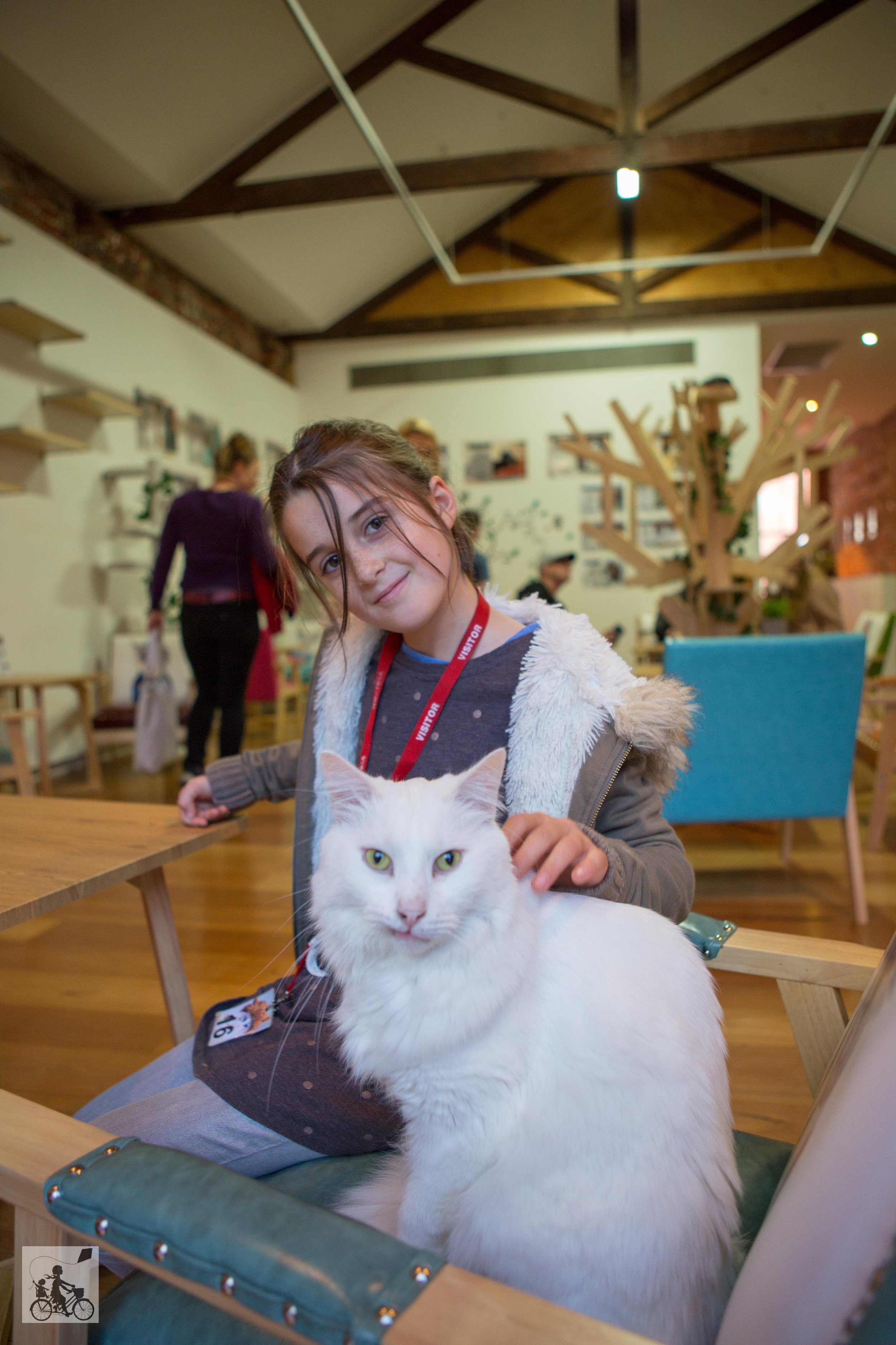 Cat Cafe -  Mamma Knows West-6.jpg