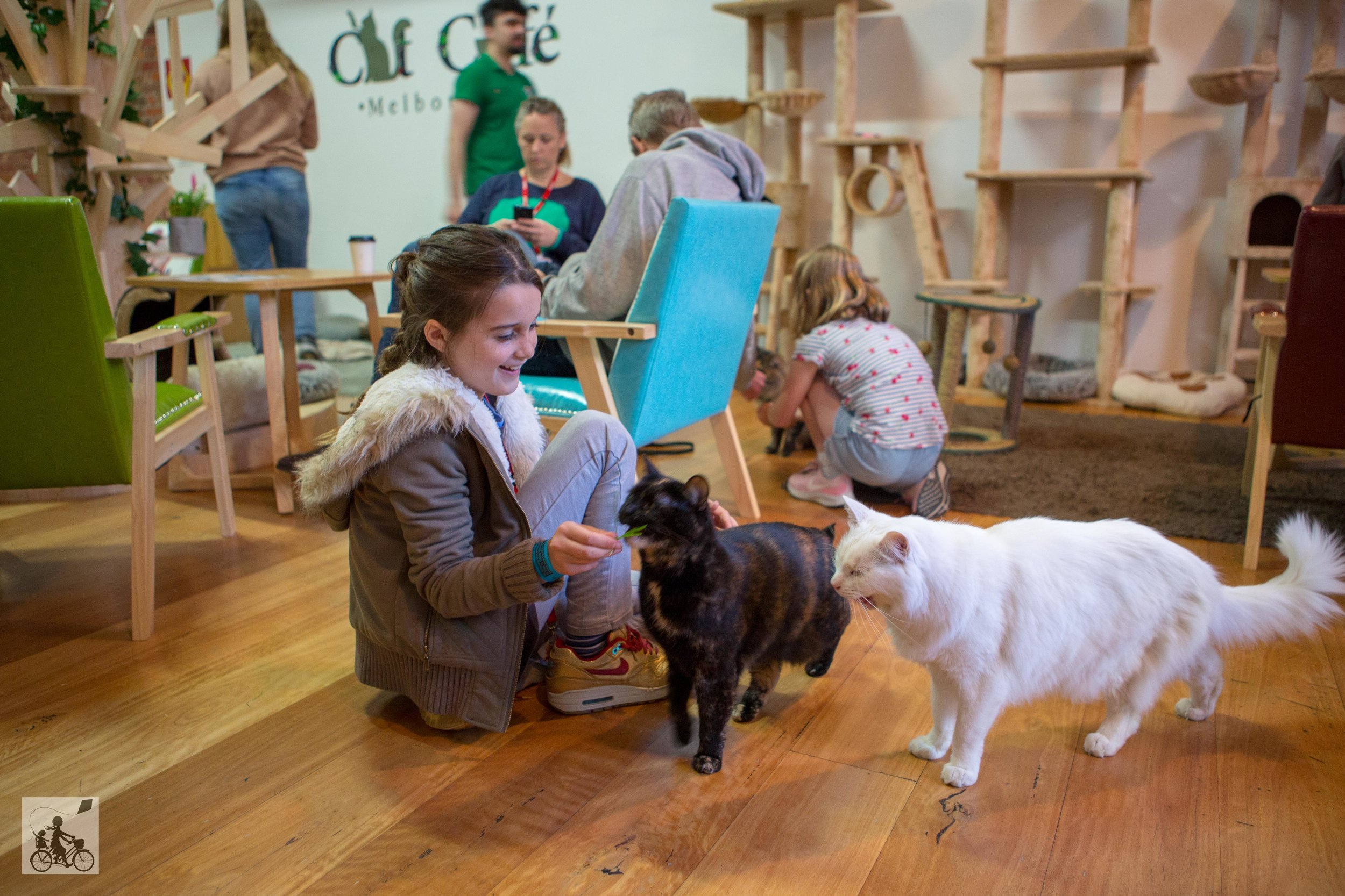 Cat Cafe -  Mamma Knows West-15.jpg