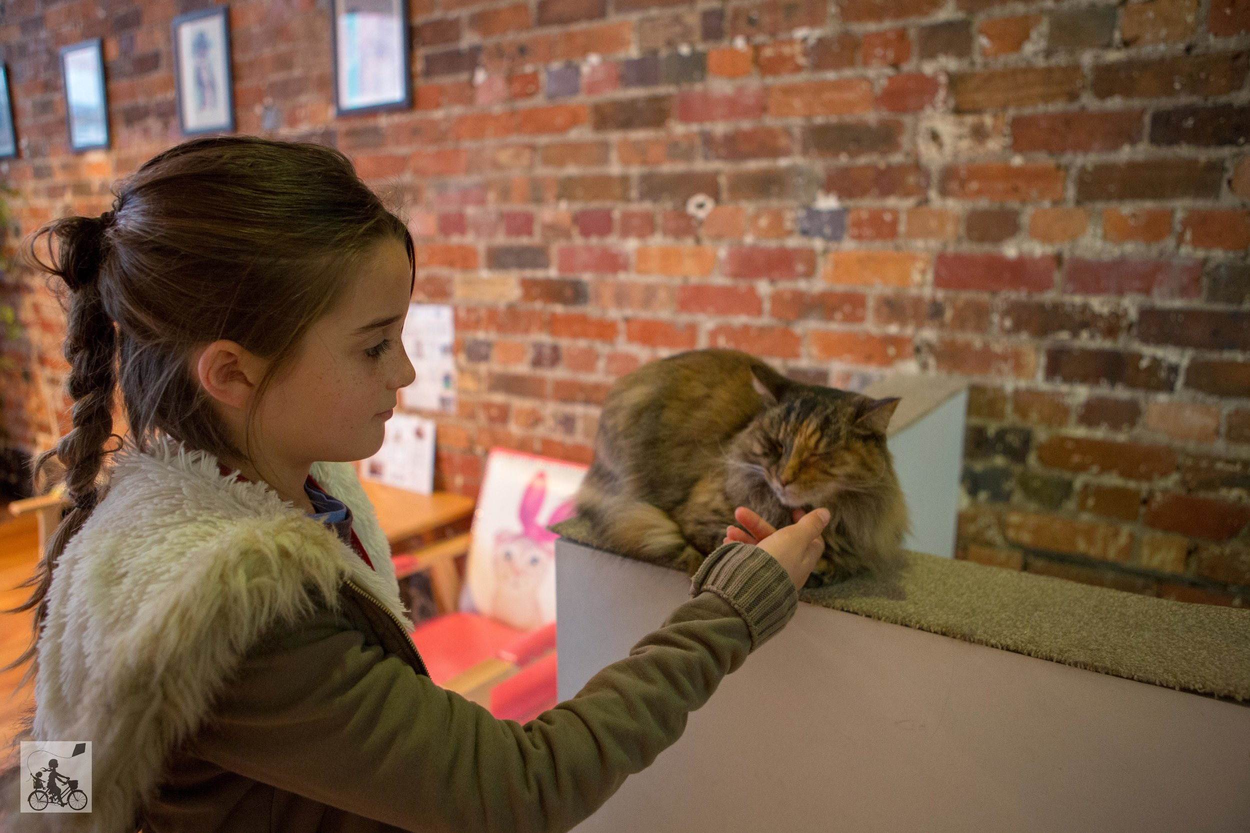 Cat Cafe -  Mamma Knows West-3.jpg
