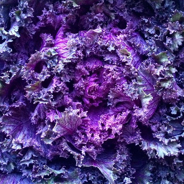 Flowering kale #foodporn #kale #floweringkale #dinner #hættessu