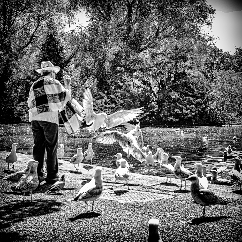 Feed the birds...