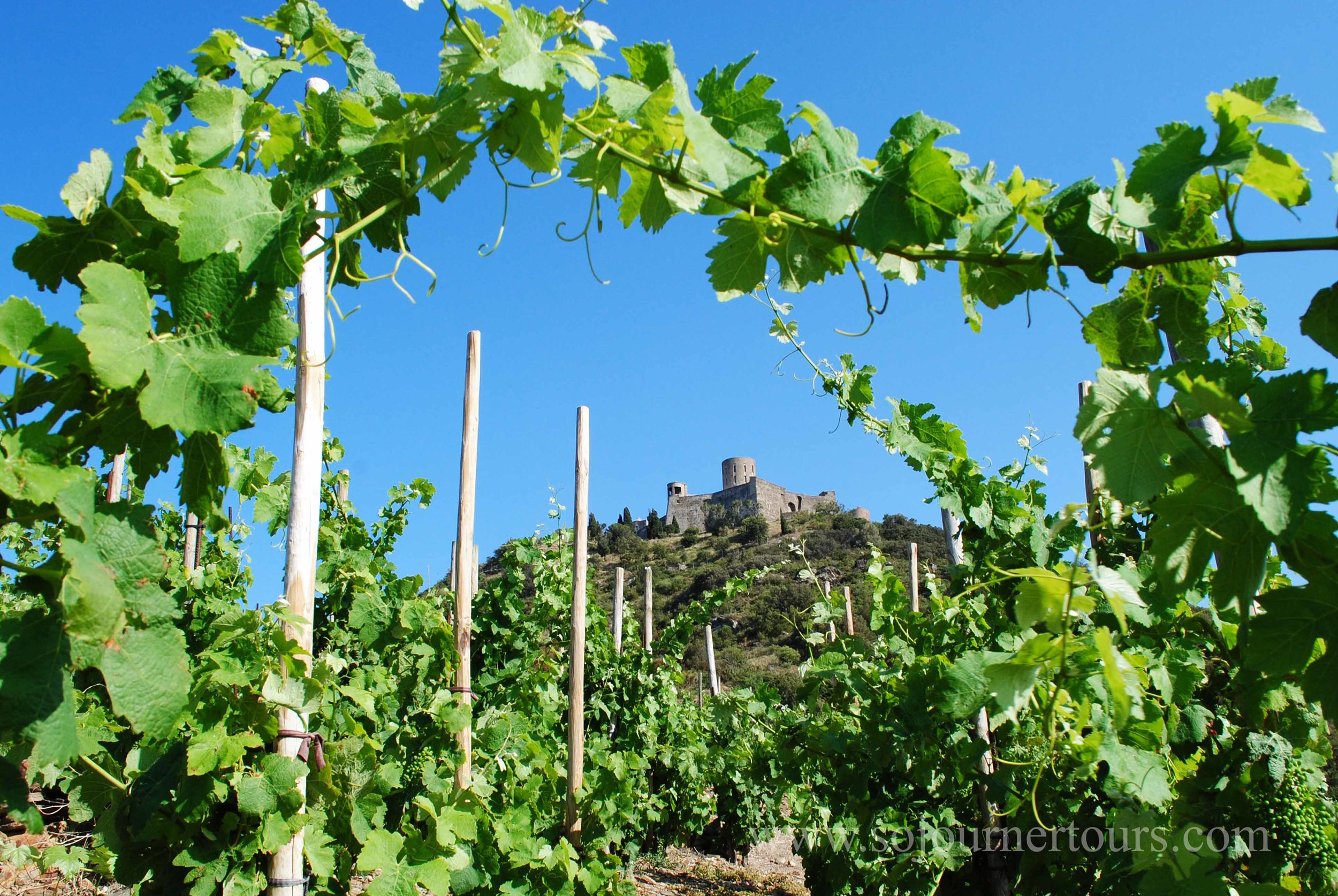 Hiking through the vineyards up to Fort St. Elme.