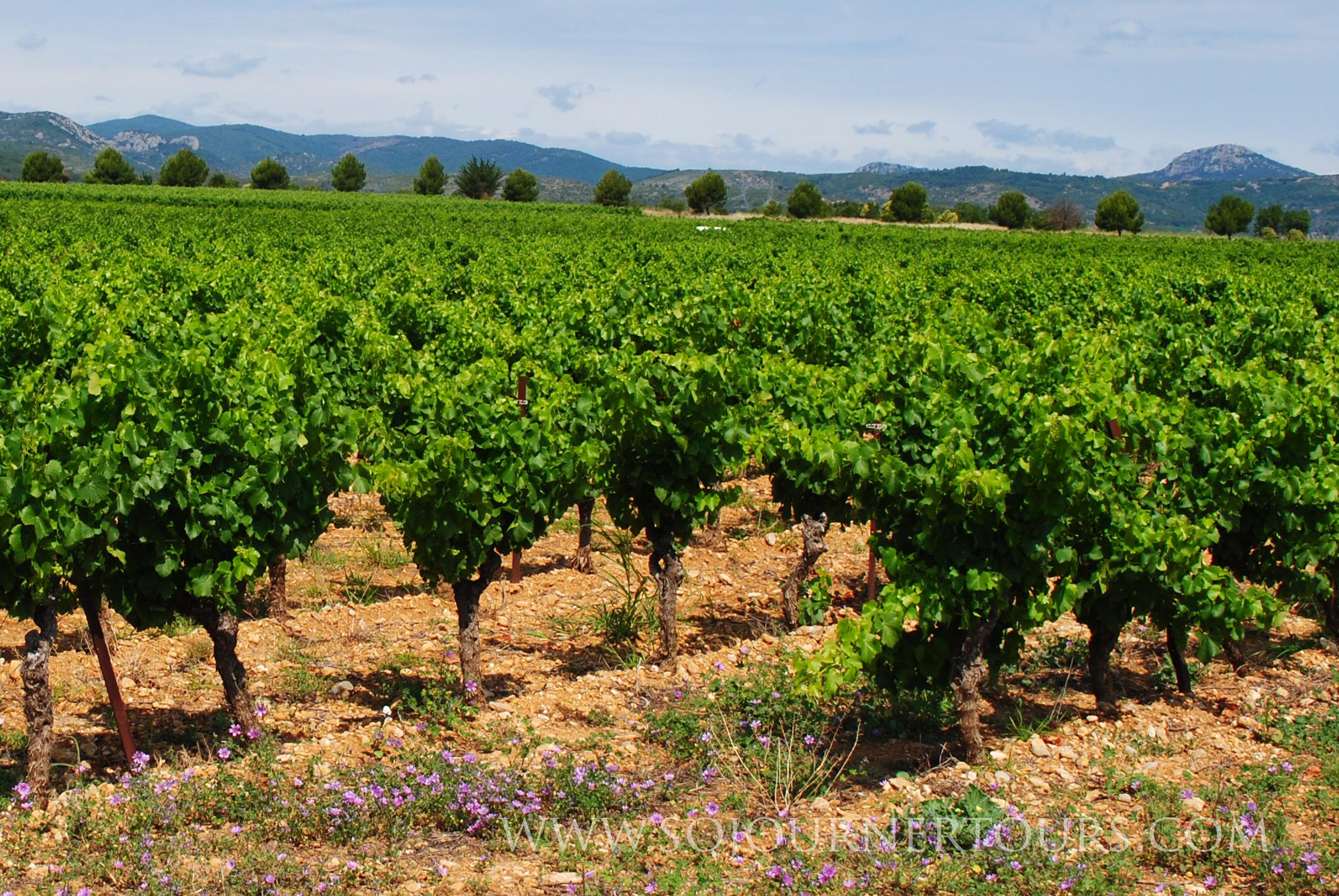 Vineyard, France: Sojourner Tours