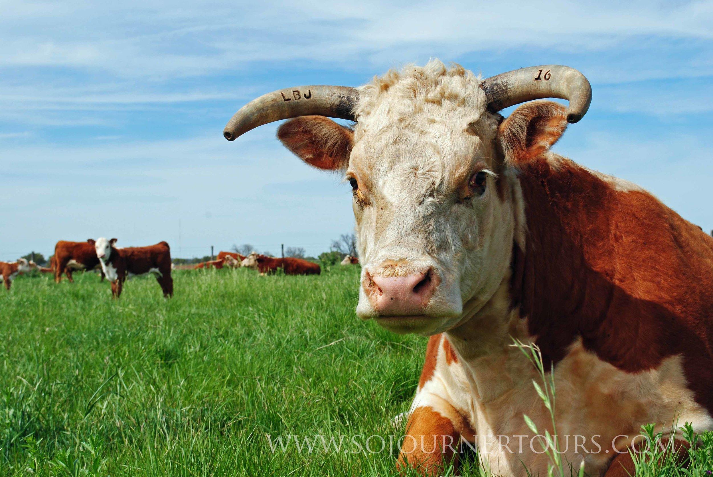 LBJ Ranch Texas