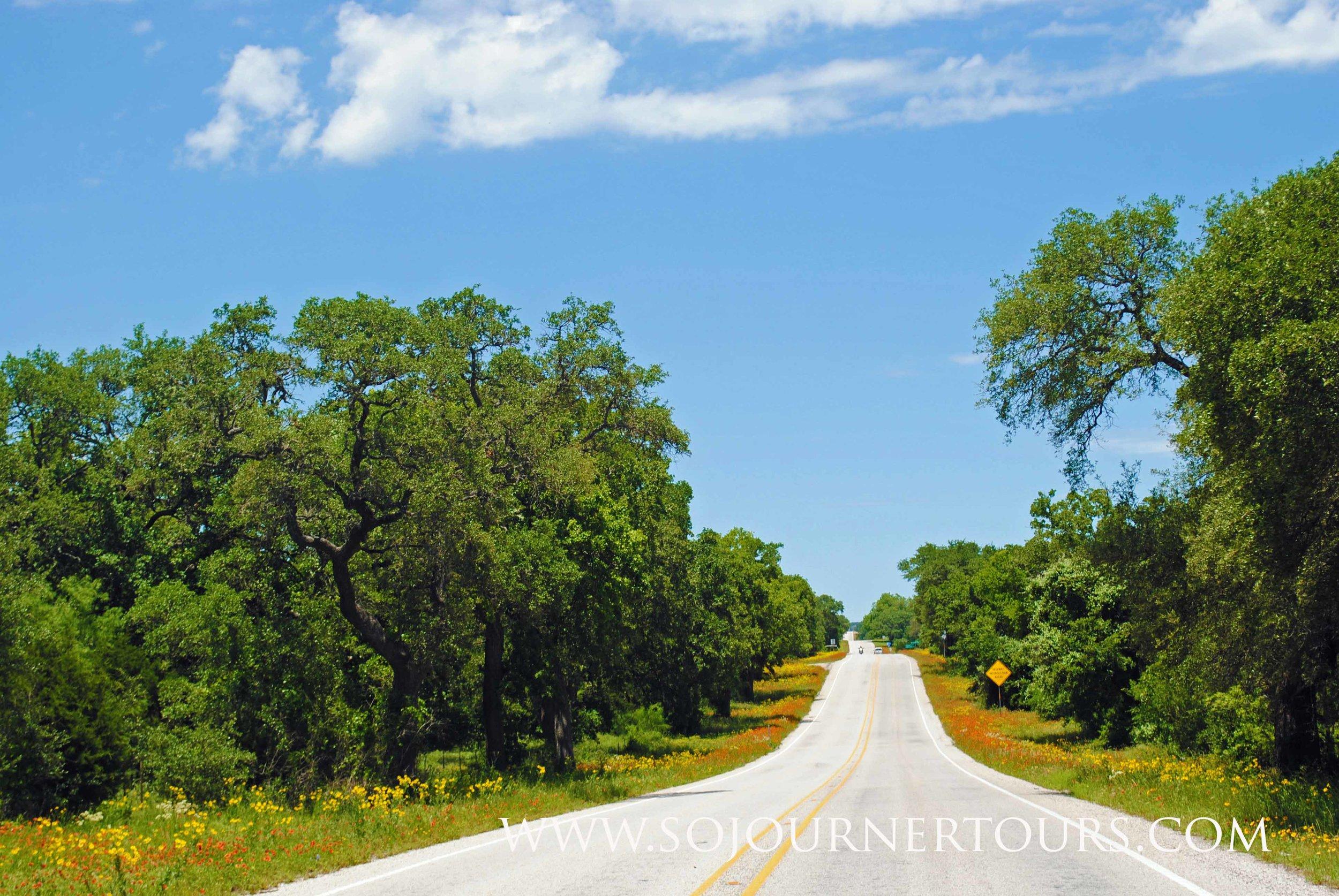 Road-trip Texas Wildflowers
