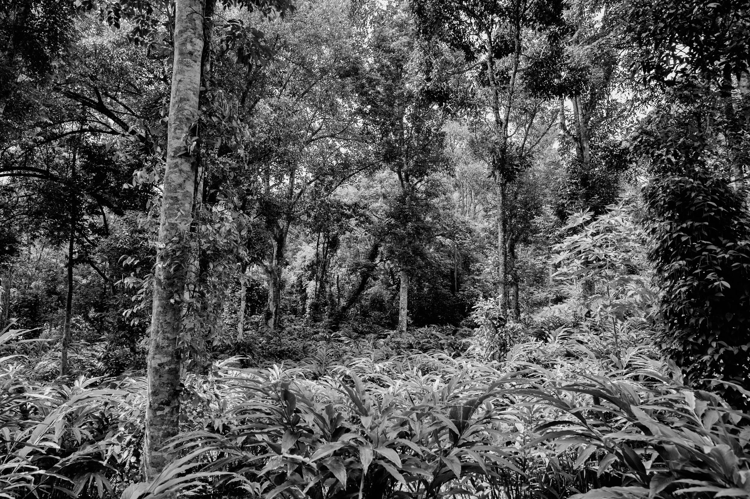 The jungle, Kerala, India, 2014
