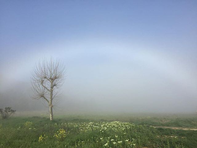 #morning #fog #rainbow #vallondespalombes