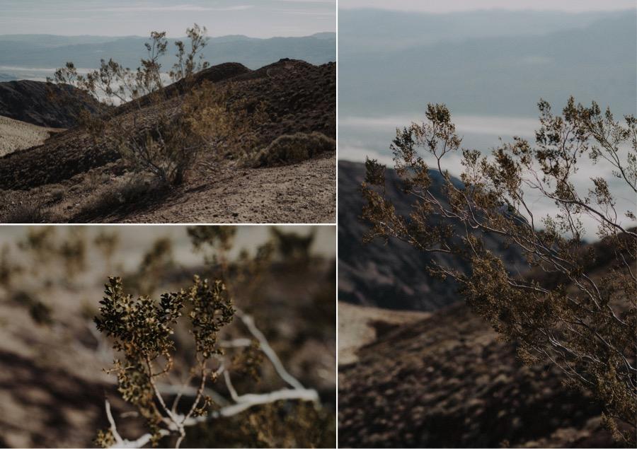Death Valley Desert Elopement0007.jpg