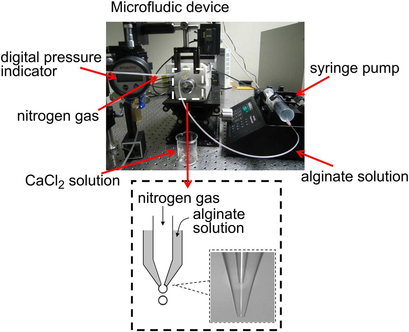 Scaffold_Microfluidic_Setup.jpg