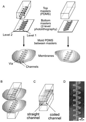 "Complex PDMS structure ""sandwiching"" a membrane between two layers"