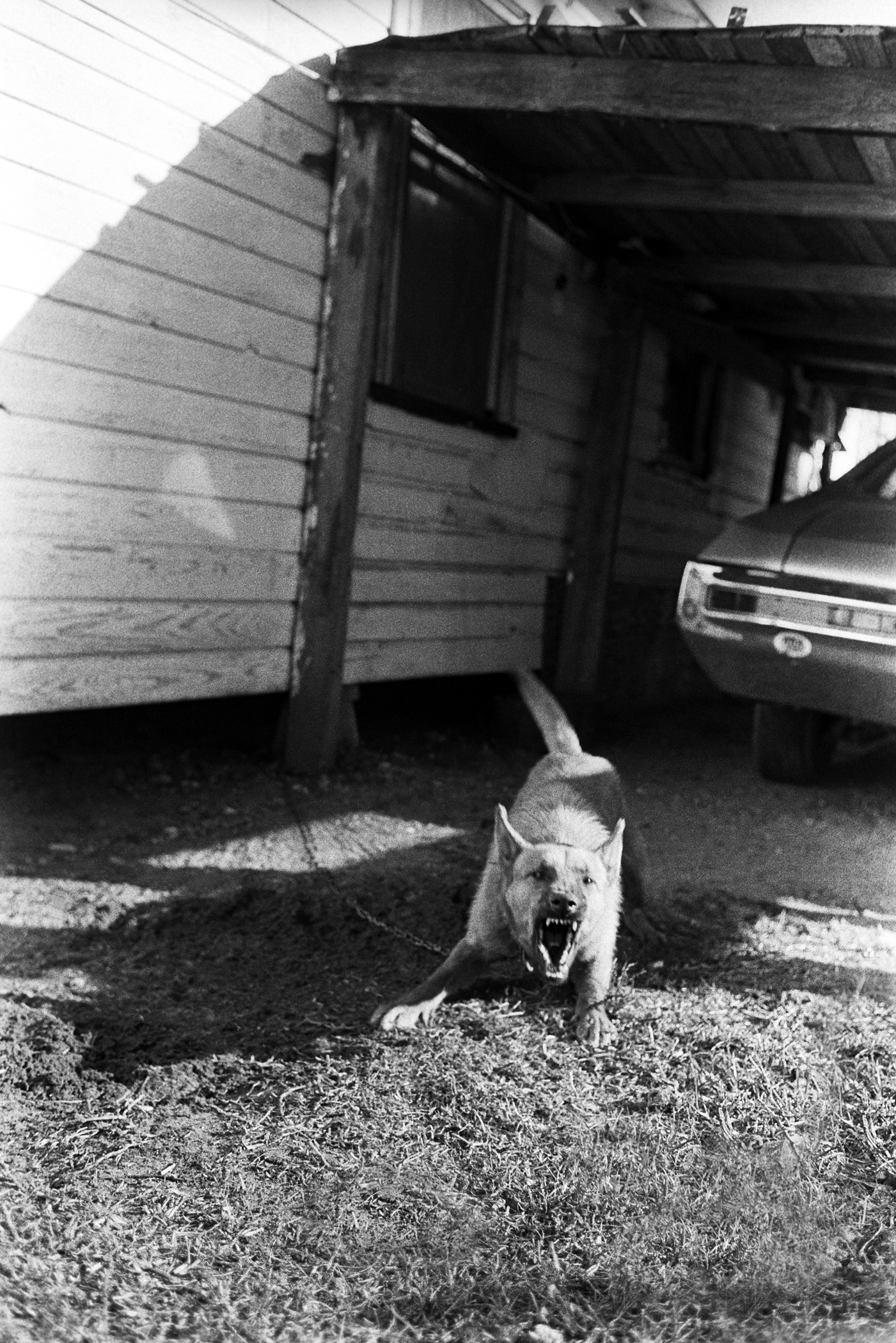 Baylen Barking Dog.jpg
