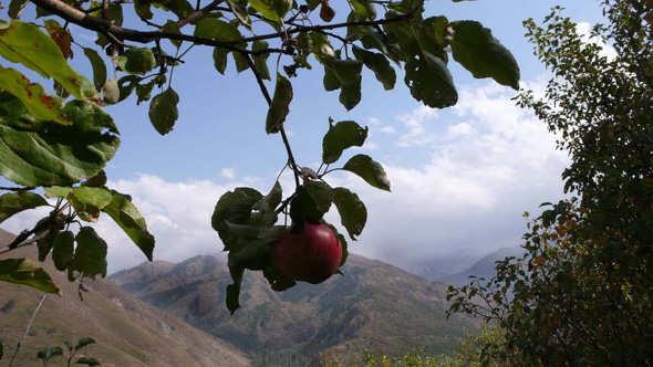 Apple_Branch_Tien_Shan_Mts_East_Kazakhstan.jpg