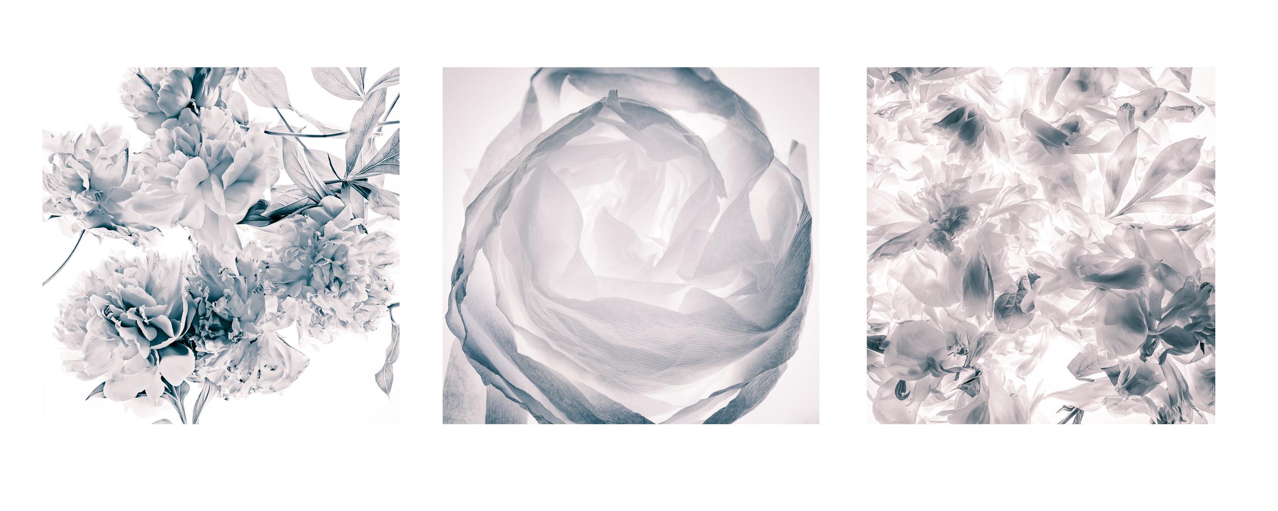 triptych two.jpg