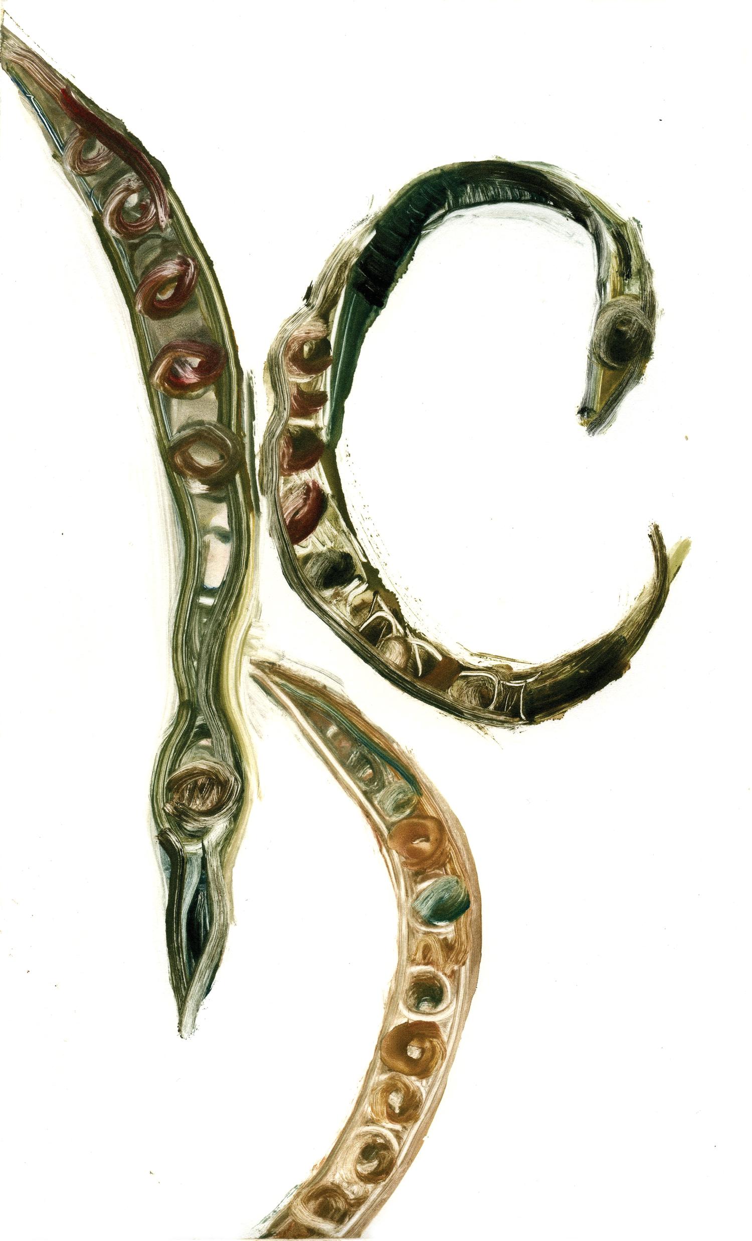 """Seed Pods (Altos de Chavón Residency), 12"""" x 7"""", Monotype."""