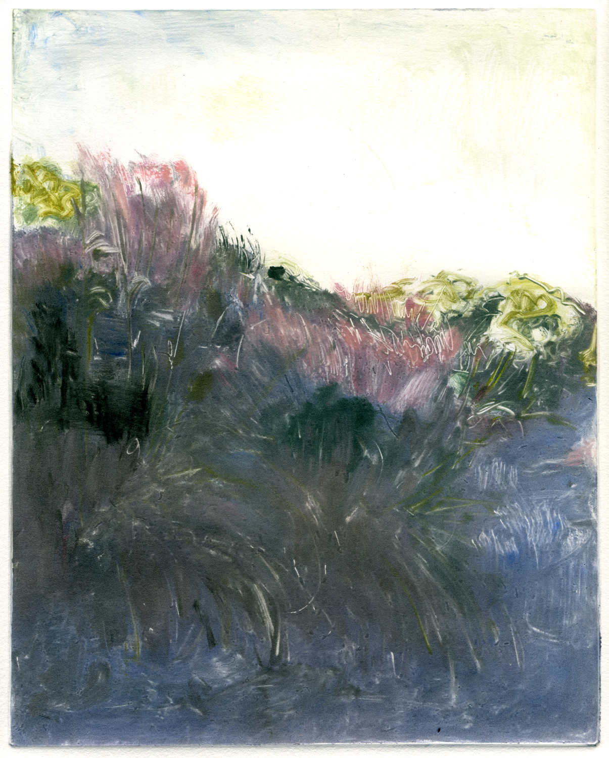 """Pampas grass (Route 1), 10"""" x 8"""",   Monotype."""
