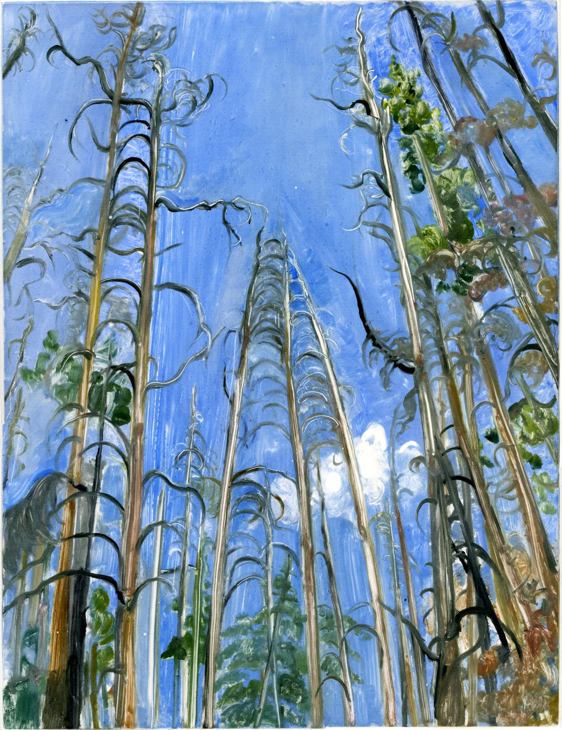 treetopstreeprojectweb.jpg