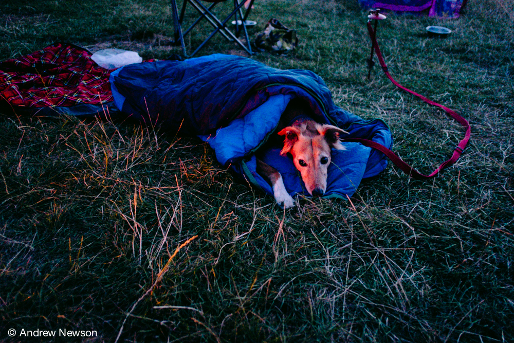 Camp dog, Bella. © Andrew Newson