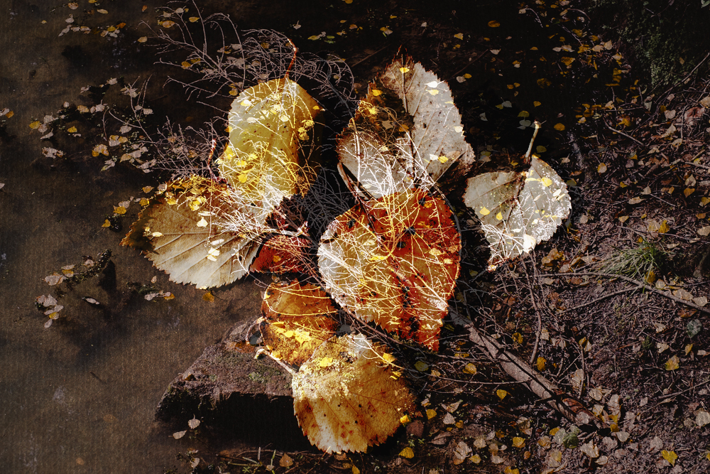 Leaves #1 © Andrew Newson