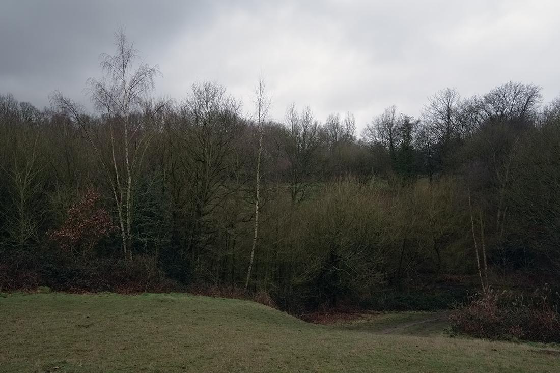 Hampstead Heath 14.02.2015 © Andrew Newson