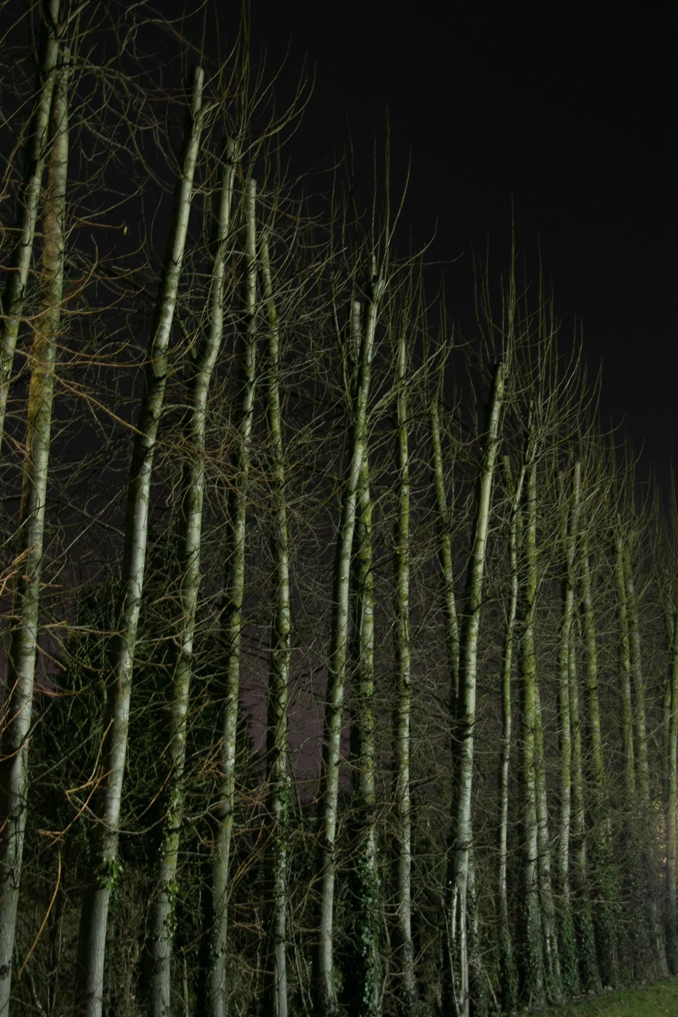 LotteGarner_02_Night lights_2_2000px.jpg