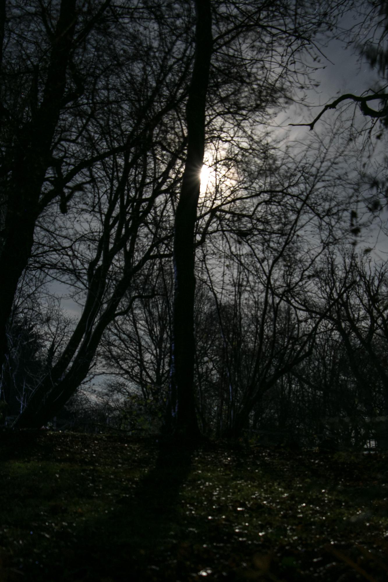 LotteGarner_04_Night lights_4_2000px.jpg
