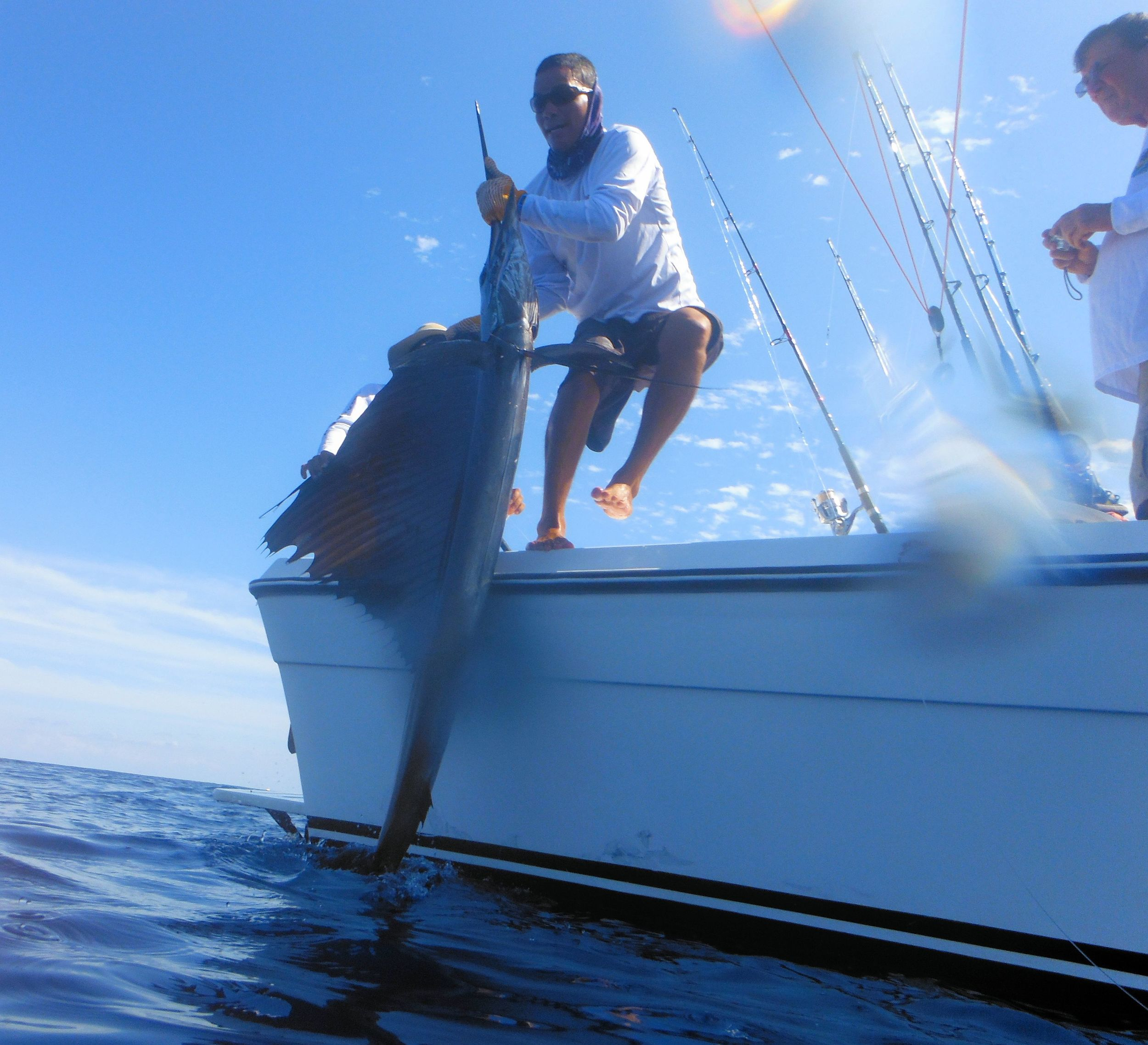 First mate Kevin jumps in to release a sailfish on the Moonwalker- January 23.