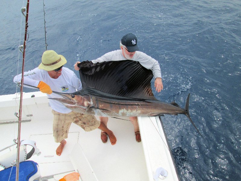 Feb. 3 While the Barbers for their first day Offshore with the MoonWalker returned to the slip very pleased with the release of 5 Sailfish