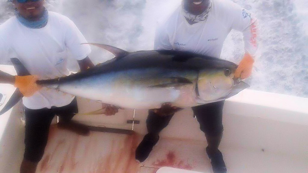 JANUARY 6, 2017 - 100 LB. TUNA CAUGHT ON THE MOONWALKER