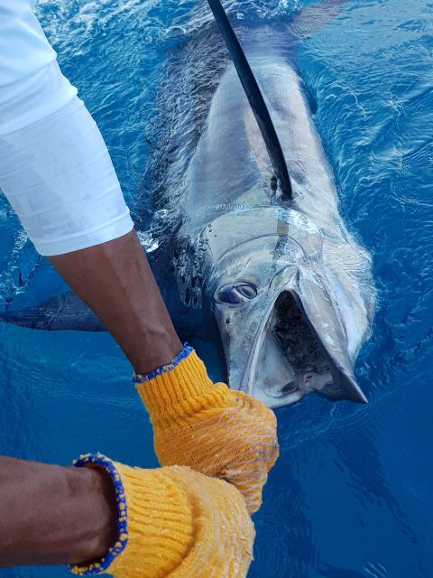marlin fishing in quepos