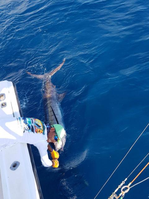 marlin fishing in quepos