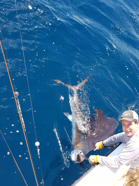 sailfishing in quepos