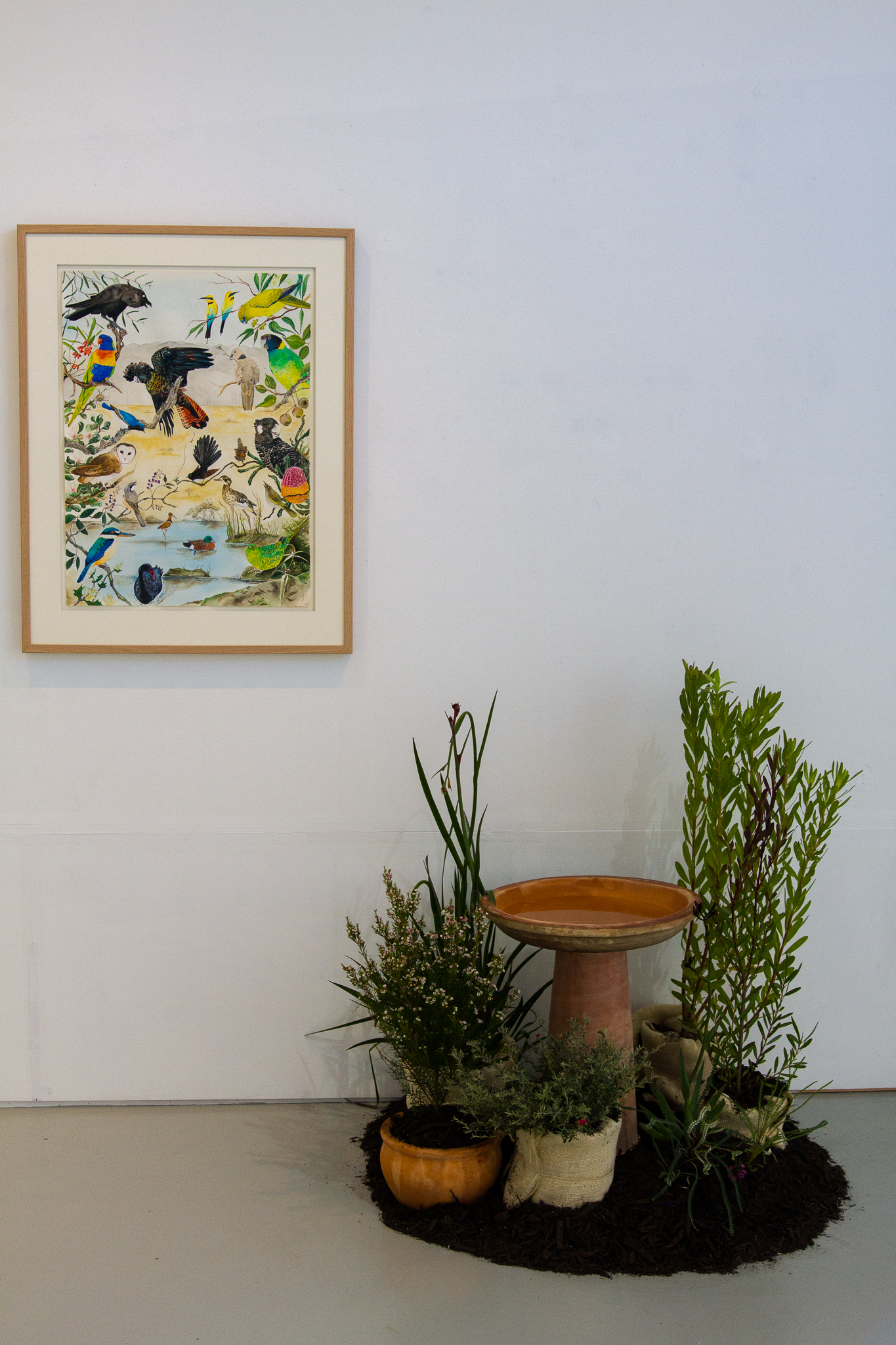Donna Franklin,  Kaartdijinboort Kalyogool Wirt - No Knowledge Forever Empty , 2016, watercolour, acrylic, pencil, pen, plants, soil and bird bath, Framed drawing: 76cm x 56cm.