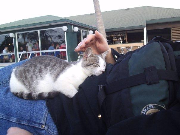 Sal resort cat.jpg