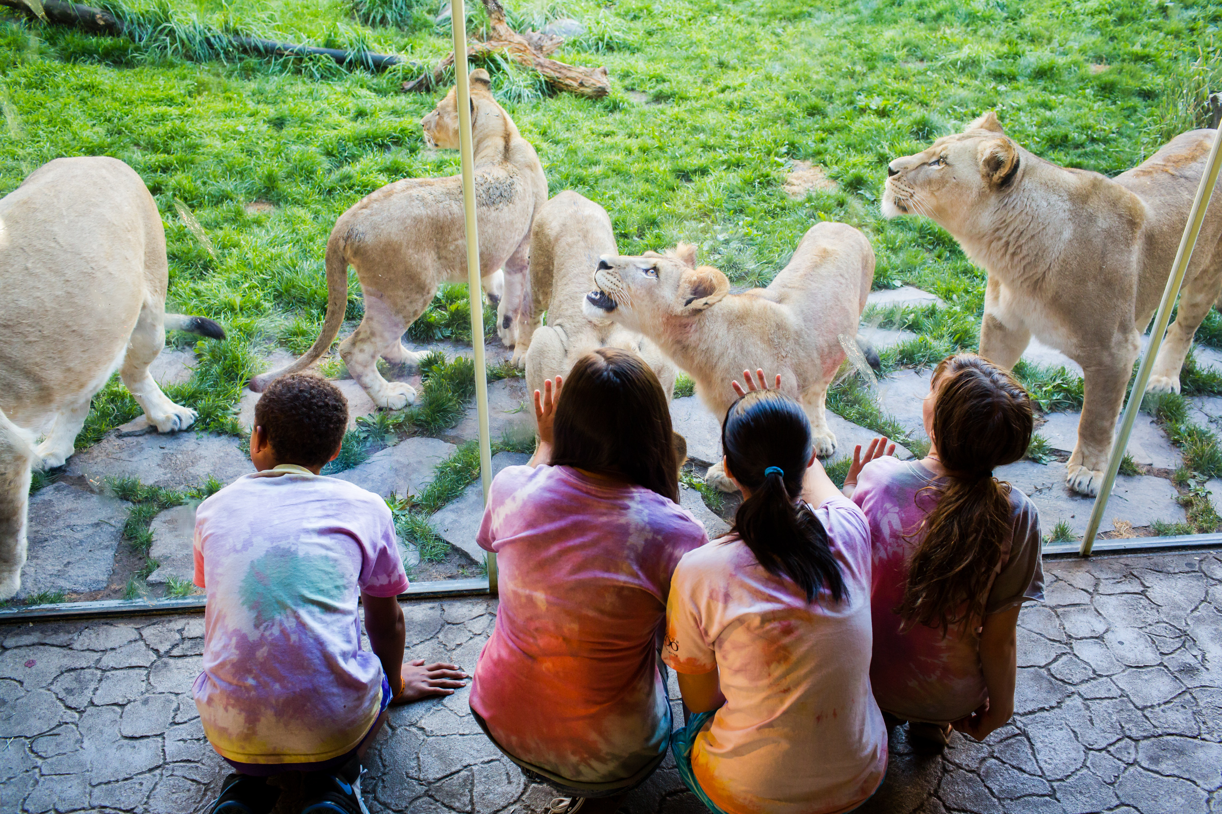 Oregon Zoo Summer Camp, Portland Oregon.