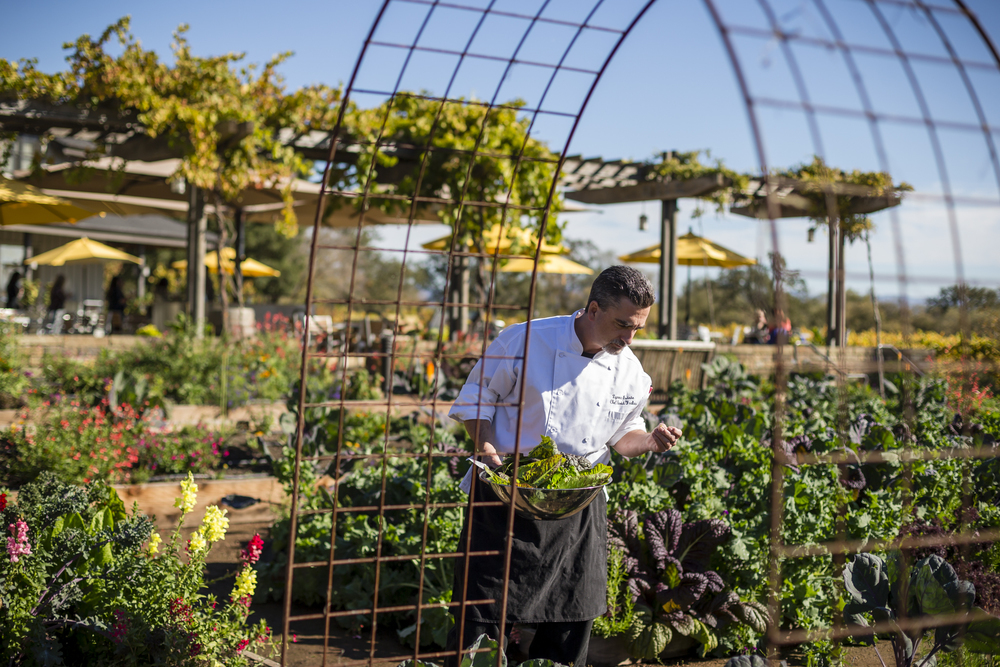 On November 7th, 2015 Chef David Frakes picks fresh ingredients from the expansive organic vegetable gardens at the family-owned Lynmar Estate in the Russian River Valley of Sebastopol, CA. At the beginning of each season, David sits down with the lead gardener to plan the menus for the season. Michael Cima 860-235-6283  michael@lynmarestate.com
